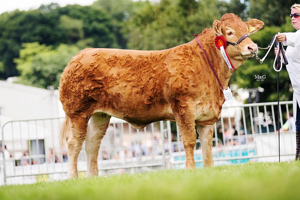 2990-Foxhillfarm-LooksThePart-9778