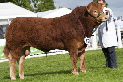 Foxhillfarm-Lord-of-The-Rings-Junior-Champion-and-Overall-Male-Champion1-425x283