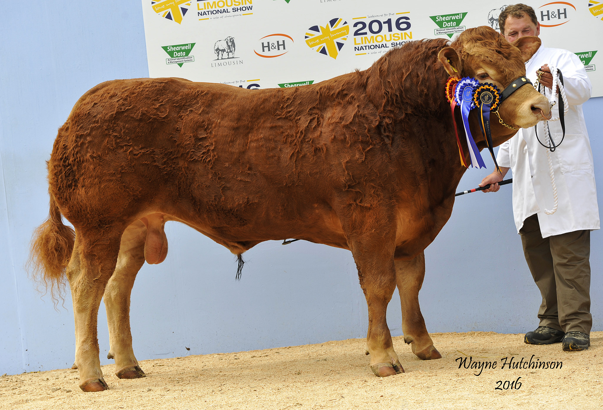 Foxhillfarm Lordof the ring - Junior Champion and Res Overall Male