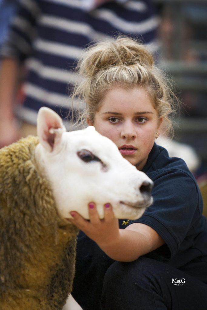 Texels – Foxhill Livestock